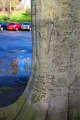 The graffiti tree 8/365 (Beaumonth) Tags: park tree wet car project puddle one graffiti object pop days 365 edition 2014 project365 beaumonth 3652014 beaumonthimages