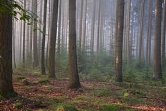 Exloo (Rene Mensen) Tags: light sun holland tree forest nikon exloo d5100