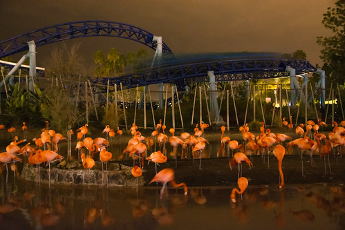speeding through the flamingos at night by the-difference, on Flickr