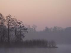 Elévation ★+°° (Titole) Tags: mist morning sunrise trees arbres titole friendlychallenges thechallengefactory favescontestfavored nicolefaton thumbwrestlingchamp 15challengeswinner storybookttwwinner