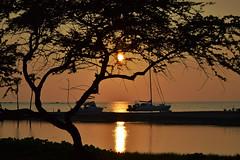 A Bay sunset 2-10-14 (heartinhawaii) Tags: ocean sunset sea palms hawaii pacific silhouettes palmtrees hawaiiansunset bigisland fishpond abay anaehoomalubay hawaiisunset kohalacoast hawaiiisland kiawe palmsilhouette kuualiifishpond nikond3100 abayfishpond bigislandfishpond kiawesilhouette bigislandinfebruary hawaiiinfebruary