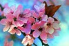FEERIQUE PRINTEMPS ! (Gilles Poyet photographies) Tags: fleurs printemps beaumont puydedôme autofocus aplusphoto creativemindsphotography artofimages mygearandme ringexcellence rememberthatmomentlevel1 rememberthatmomentlevel2 rememberthatmomentlevel3