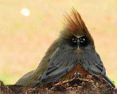 strange (gailpiland) Tags: bird strange surreal wierd mirrored photoart vividimagination thegalaxy theperfectphotographer awardtree gailpiland crazygeniuses ringexcellence infinitexposure
