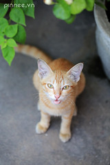 Can I have more food? (pinnee.) Tags: cats cat kitten kittens meow meowmeow streetcat cuteanimals meo mo cuteanimal streetcats cutepets gettingcloser cutepet