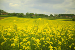 campagne (wouf_is_wouf) Tags: france rural fleurs jaune village weekend lumire peinture promenade pause plans paysage campagne espace canton champ balade calmer plaine randonne colza dtente impressionnisme respirer reposer bourgade distraire