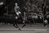 2014 Alabang Country Club Chairman's Cup (alabang) Tags: horses polo 2014 ayalaalabang eduardolopez alabangcountryclub chairmanscup ef400mmf28lisiiusm stefanojuban santijuban