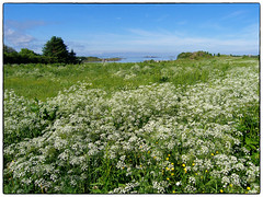 Sommer ved havet #1 (Krogen) Tags: nature norway landscape norge natur norwegen olympus c7070 noruega bud scandinavia romsdal fræna krogen landskap noorwegen noreg skandinavia
