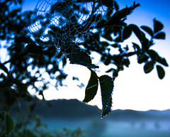 Wet leaves (Tomislav C.) Tags: wood morning trees sky mist mountains net nature beauty grass leaves forest sunrise landscape dawn droplets leaf shadows natural meadows croatia drop naturally
