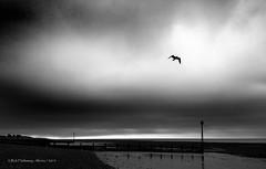 Morning flight (rhfo2o - rick hathaway photography) Tags: sea bw beach sunrise mono blackwhite seaside westsussex iphone rustington iphones4 rhfo2o