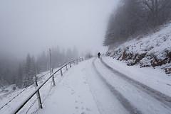 Solitude / Soledad (toncheetah) Tags: bosnia bosna fog mist haze snowyroad woods trees tree