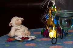 Lambie (htong1958) Tags: birthday animal stuffed cherries celebration lamb lambie bashfully