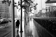 (Pay No Mind) Tags: china street city trees blackandwhite bw film wet rain 35mm reflections fuji cloudy 28mm gray beijing foggy contax rainy g2 100 hazy smoggy acros polluted biogon