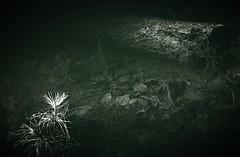 submerged (LauraSorrells) Tags: favorite plant green water pond log jasper submerged littlebearpond episcopalchurchoftheholyfamily somberbeauty