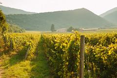 26 July, 18.29 (Ti.mo) Tags: italy iso100 vineyard italia wine f56 abruzzo capestrano popoli 0ev  secatf56 vallereale ef40mmf28stm vignetodipopoli vignadicapestrano