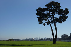 Crissy Field,    San Francisco (Neil Pulling) Tags: sf sanfrancisco california usa nationalpark pacific pacificocean crissyfield goldengatenationalparks thepresidio usanationalpark goldengatenationalparksconservancy