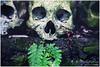 Everyone Will Be The Same (Bali Freelance Photographer) Tags: bali canon skeleton eos tomb pemakaman madeyudistira truyan myudistiraphotography