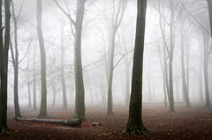 Autumnal woods in the fog, Warley Woods in Bearwood, Birmingham, UK #misty #woods (SimonLea2012) Tags: uk autumn trees light shadow mist nature weather misty fog forest woods nikon day spooky lonely autumnwatch d7000