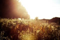 Evening Bliss (Jonas Rask) Tags: light fall sc colors denmark golden evening colours fuji f14 voigtlander hour fujifilm 40mm nokton mable xpro1 fujifilmxpro1