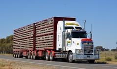 O'Sullivans (quarterdeck888) Tags: nikon flickr transport frosty lorry trucks express kenworth tractortrailer semitrailer bigrig movingpictures haulage quarterdeck osullivans heavyvehicles roadtransport bdouble t609 newellhwy stockcrate truckies highwaytrucks australiantrucks d5200 expressfreight australianroadtransport roadfreight jerilderietruckphotos jerilderietrucks outbacktrucks osullivanslivestocktransport