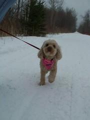 (mestes76) Tags: pets dogs minnesota zoey buddy duluth mungertrail 021813
