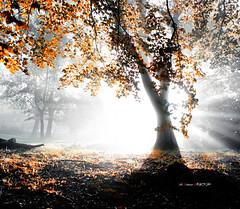 Niebla y contraluz (Jabi Artaraz) Tags: light nature contraluz sony natura zb bizkaia argia euskoflickr superaplus aplusphoto jartaraz alfa350