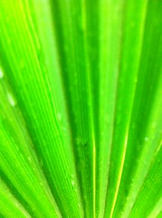 Blurr Palm (Ali Cihan Ozsut) Tags: world pink flowers autumn summer flower color detail macro green apple nature floral colors beautiful rain turkey wonderful garden photography photo leaf petals amazing flora backyard nikon focus colorful dof close purple natural bright little zoom blossom bokeh shots turkiye great sunny center drop best palm appreciation petal professional ali clear example sample pollen oxalis iphone uyku defocus ozsut 2013 spiralis vulcanicola l810 iphoneography photographyforrecreation
