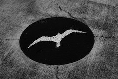 DSC01118.jpg (ntstnori) Tags: bird sign tokyo sony  manhole f28 koto carlzeiss lalaport 2470mm toyosu   variosonnar   variosonnart2470mmf28zassm 99 slta99v