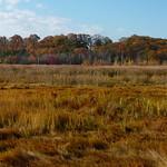 Salt meadow in autumn thumbnail