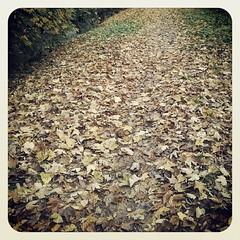 Hoy amanece con un color especial. Estamos en otoño pero en nosotros está que el color de la primavera y la calidéz del verano nos rodee. Hay días que te levantas y te das cuenta que la mariposa no se retiene entre nuestras manos si quiere volar... solo q