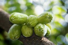 Averrhoa bilimbi - HBW (Henny HR) Tags: canon 1047 belimbingwuluh averrhoabilimbi sourfruit