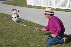 Jumping dog (raptoralex) Tags: people dog animal downtown florida westpalmbeach fetch peoplewatching 70200f4 canonxsi