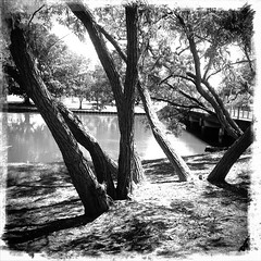 cooks river (AS500) Tags: park camera blackandwhite west tree river phone sydney retro inner cooks android marrickville earlwood
