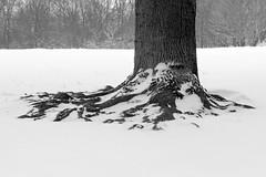 Prospect Park (Brooklyn Hilary) Tags: nyc newyorkcity winter snow cold brooklyn prospectpark snowing blizzard blustery