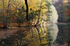 Back to Autumn (Tay-FUN) Tags: autumn lake reflection fall forest turkey trkiye bolu yedigller vision:outdoor=067 vision:plant=0623 vision:sky=055