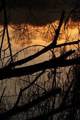Reflets (sophiri) Tags: eau reflet soir crpuscule arbre branche