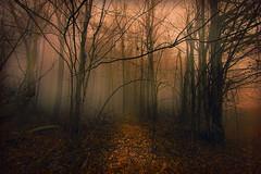Light Through the Fog
