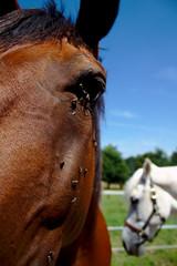 IMG_1943_dtexp (christian.riede) Tags: boy horse eye sunny flies pferd fliegen koppel leika