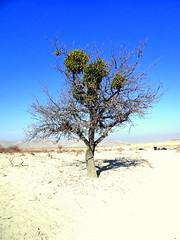 Lone tree (eucharisto deo) Tags: sun tree love turkey desert valley anatolia greme goreme nevehir hisar cappoddocia