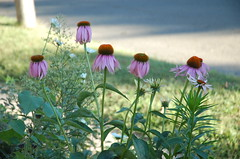 """Wildflowers by Road <a style=""""margin-left:10px; font-size:0.8em;"""" href=""""http://www.flickr.com/photos/91915217@N00/12450654204/"""" target=""""_blank"""">@flickr</a>"""