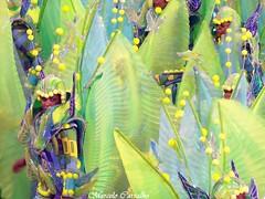 São Clemente_Carnaval 2014_Rio de Janeiro (FM Carvalho) Tags: carnival brazil rio brasil riodejaneiro de samba do shot sony cybershot carnaval escola são sonycybershot cyber clemente passarela sambódromo marquês escoladesamba sapucaí marquêsdesapucaí sambaschool passareladosamba carnavaldoriodejaneiro sambadrome riocarnival carnavalcarioca carnavaldorio sãoclemente sambódromodorio sambódromocarioca sambódromodoriodejaneiro hx9v sonyhx9v carnaval2014