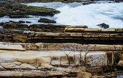Pt. Lobos State Reserve (John C. Bruckman @ Innereye Photography) Tags: wildlife meadows diving headlands seals sealions ptlobos otters coves seabirds naturelovers whalingstation pointlobosstatereserve greywhales californiastateparks johncbruckman underwaterhabitats 8312514008 innereyephotography johnjbruckmancom