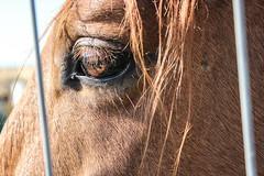 Horse (Andrea Latasa) Tags: horse sun nature beautiful photoshop canon caballo photography sunny lovely olite navarra zaldia
