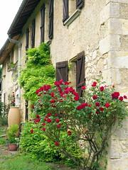 Le rosier rouge (LILI 296 ...) Tags: rouge pierre maison rosier volet canonpowershotg16
