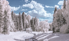 Slavyanka river in Pavlovsky park (IR) (A. Stavrovich) Tags: park trees summer sky panorama nature water clouds forest river ir daylight scenery shadows russia outdoor infrared saintpetersburg pavlovsk falsecolor canon50mm colorprocessing cokinp007 canon400d wowiekazowie