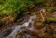 Calm to Chaos (Traylor Photography) Tags: wood light motion fern detail nature water rock alaska waterfall moss berry nikon outdoor clarity clear anchorage fallscreek sewardhighway devilsclub tamron1530mm calmtochaos