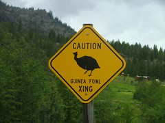 Guinea Fowl Roadsign (Larry Myhre) Tags: guineafowl roadsign oregon 201005image
