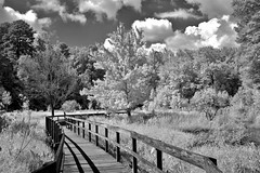 Wetlands Boardwalk 2 (Neal3K) Tags: georgia ir infraredcamera kolarivisionmodifiedcamera bw blackandwhite 590nmfilter claytoncountywaterauthority newmanwetlandscenter wetlands clouds boardwalk wood trees contrast