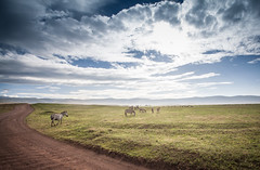 Ngorongoro Crater (SebastianJensen) Tags: africa ngorongoro nationalpark crater landscape cloud sky grass safari tanzania zebra road travel adventure nature outdoor
