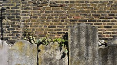 Old tombstones, old wall - St Alfege Churchyard, Royal Borough of Greenwich, London (edk7) Tags: nikond300 edk7 2012 uk england london royalboroughofgreenwich churchofengland stalfege churchyard stalfegechurchyard tombstone gravemarker memorialstone wall brick stone architecture building oldstructure ivy plant moss