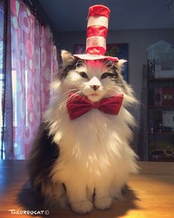 The Cat in the Hat knows a lot about that (tm_crazycat) Tags: cats pets animals cat hat catinthehat drseuss theoreocat